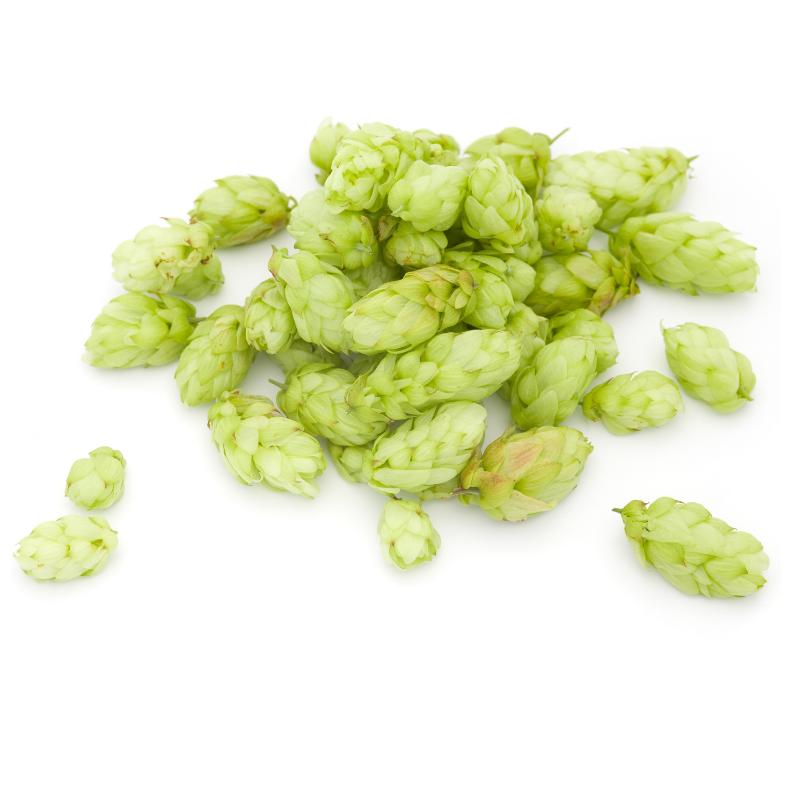 Luppoli   Birra Obici